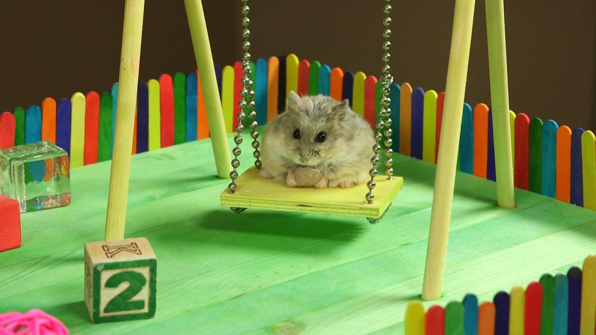 Как сделать игрушки для хомяка своими руками в домашних условиях 38