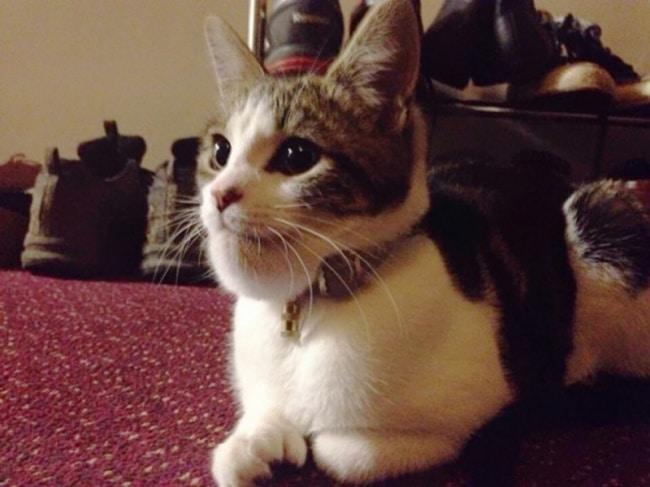 10 фото котов, проигравших схватку с пчелами рис 3