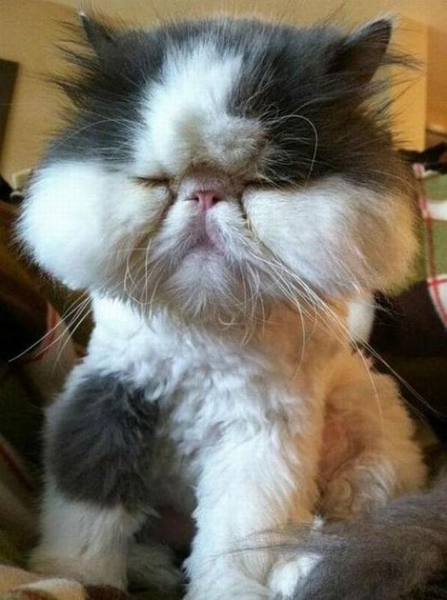 10 фото котов, проигравших схватку с пчелами рис 4