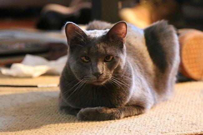 10 фото котов, проигравших схватку с пчелами рис 5