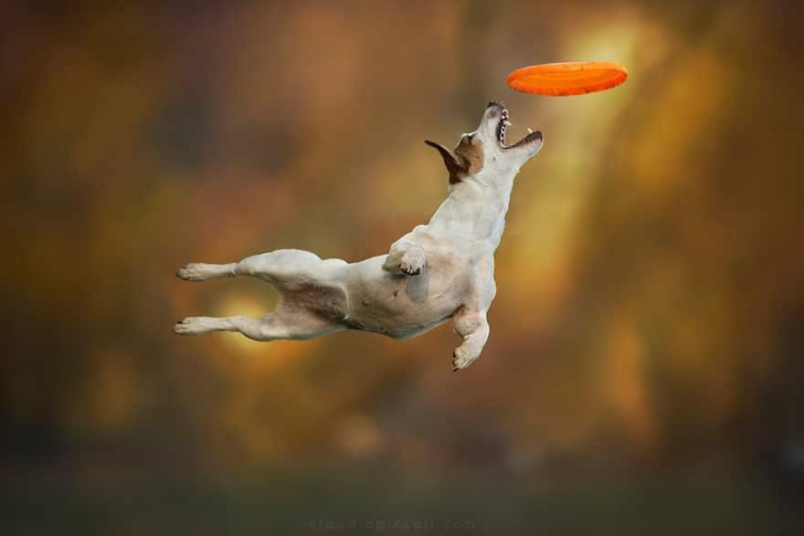 Летающие собаки существуют! Топ 10 красочных фото-доказательств рис 6