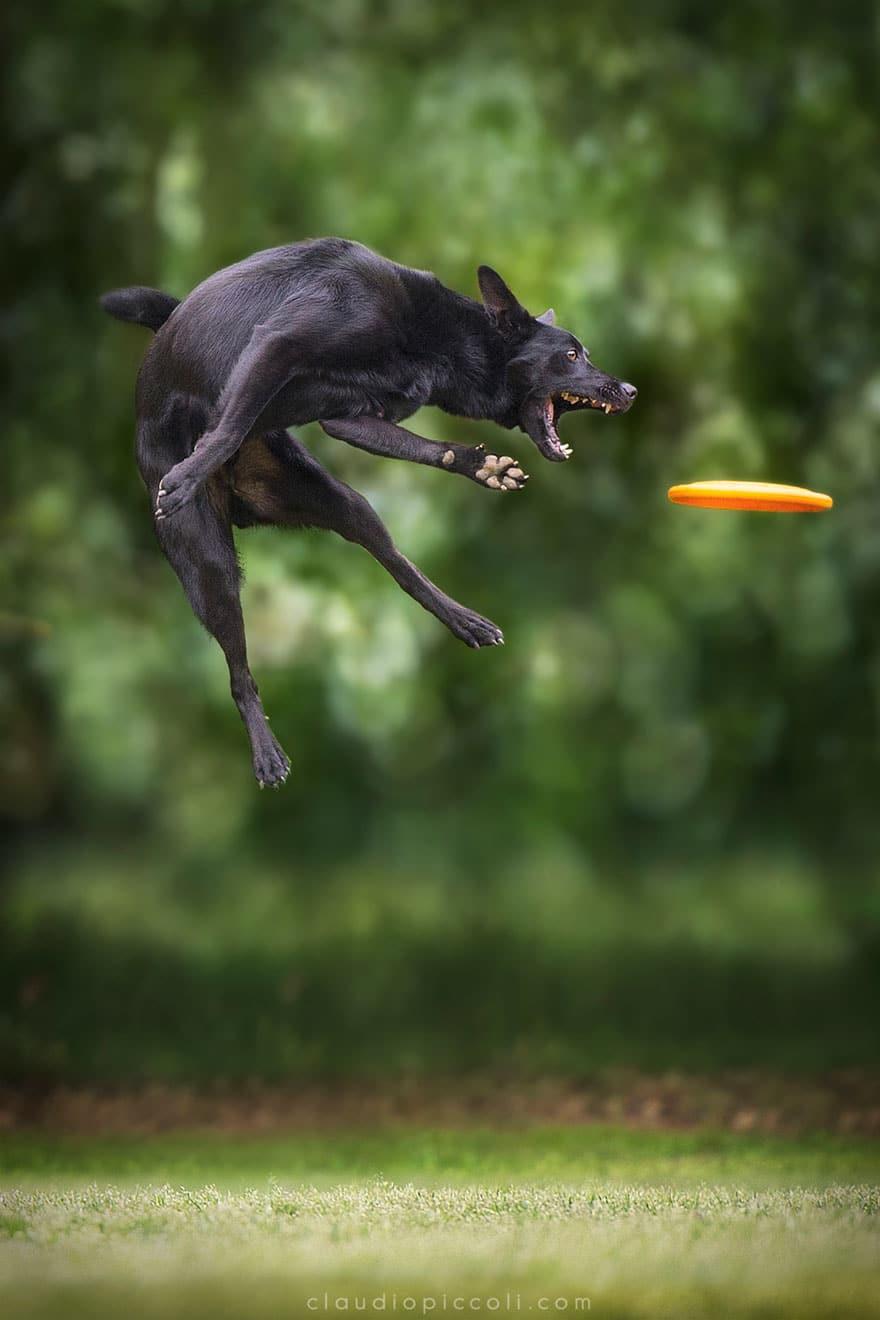 Летающие собаки существуют! Топ 10 красочных фото-доказательств рис 7