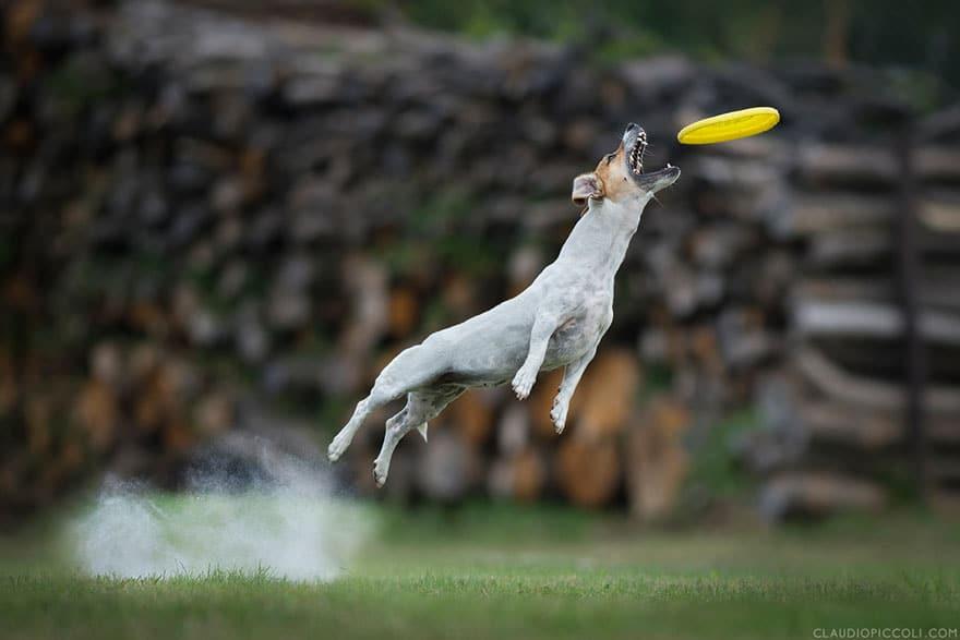 Летающие собаки существуют! Топ 10 красочных фото-доказательств рис 5
