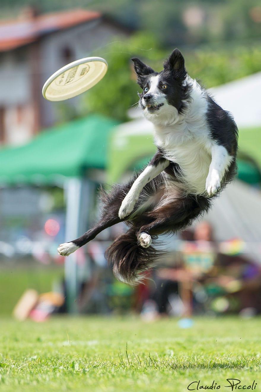 Летающие собаки существуют! Топ 10 красочных фото-доказательств