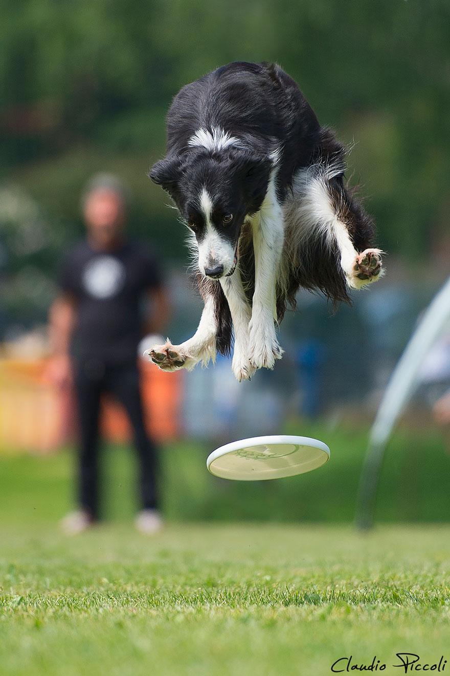 Летающие собаки существуют! Топ 10 красочных фото-доказательств рис 4