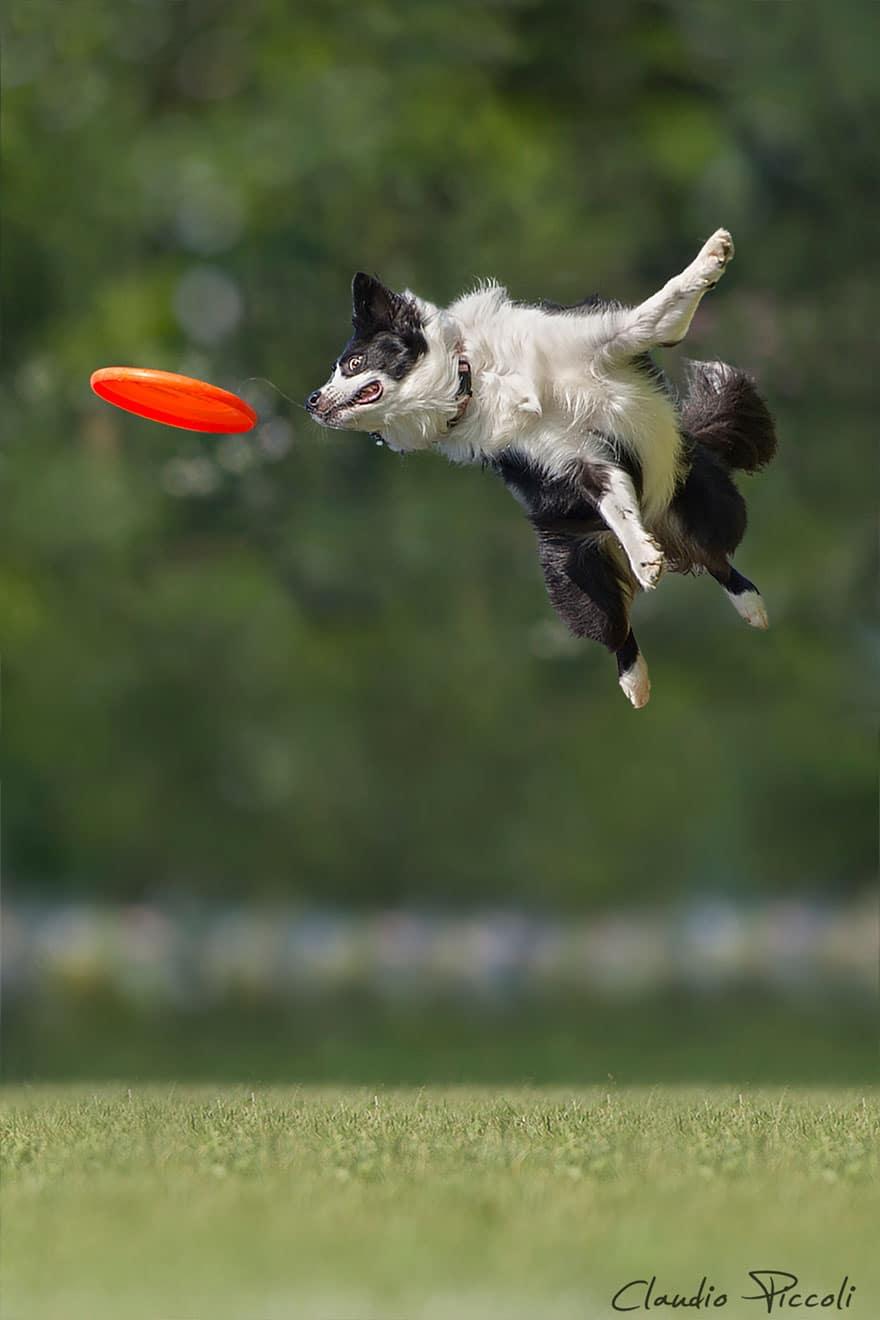 Летающие собаки существуют! Топ 10 красочных фото-доказательств рис 3
