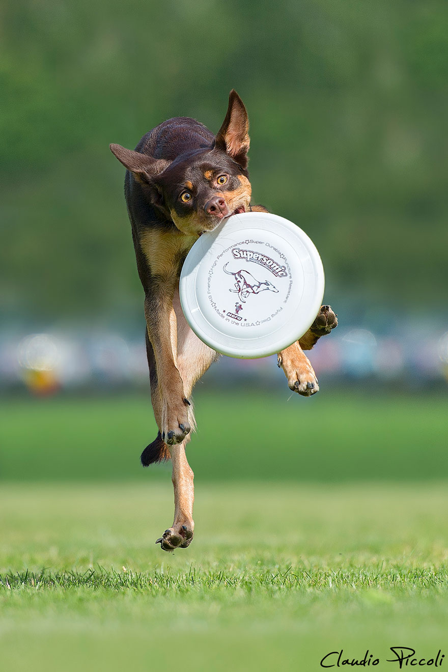 Летающие собаки существуют! Топ 10 красочных фото-доказательств рис 9