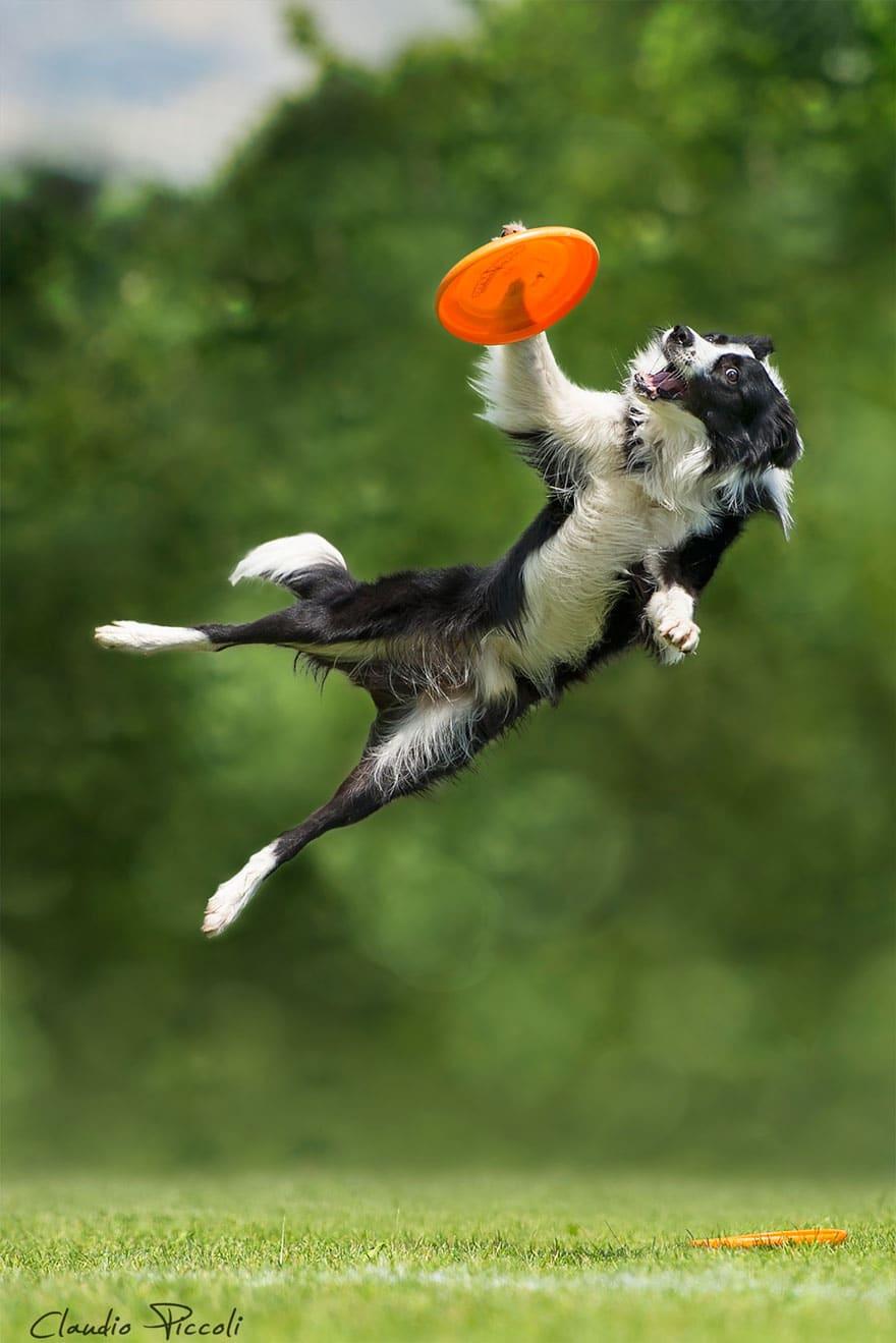 Летающие собаки существуют! Топ 10 красочных фото-доказательств рис 2