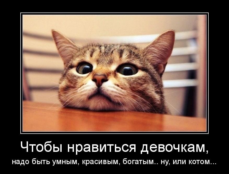 Кошки - они такие!