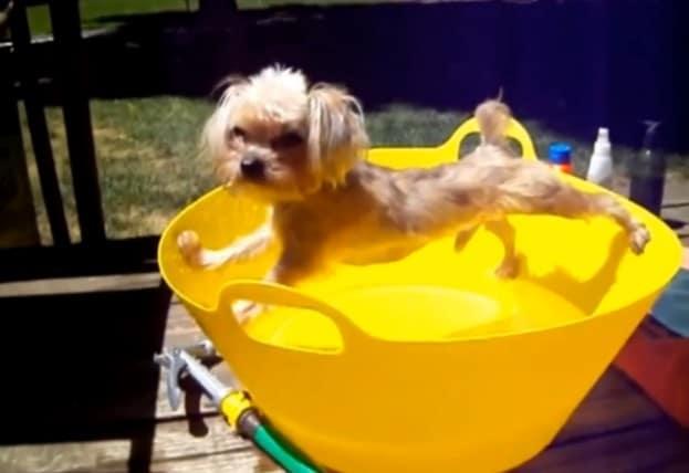 пес купаться не хотел