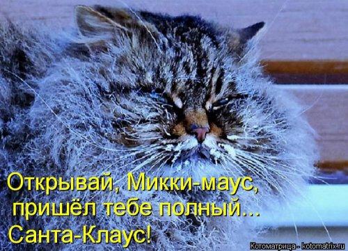 фотожабы котов рис 2