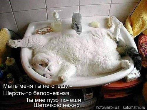 фотожабы котов рис 3