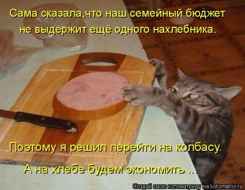 фотожабы котов рис 9