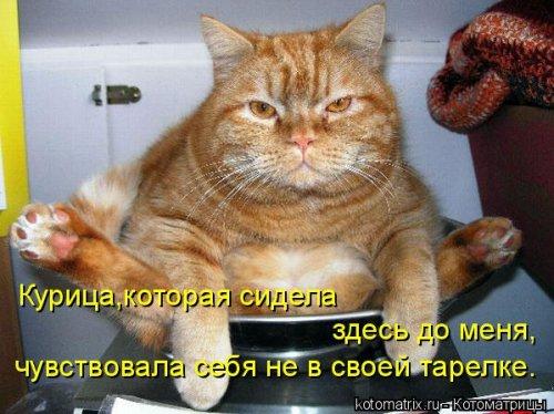 фотожабы котов рис 6