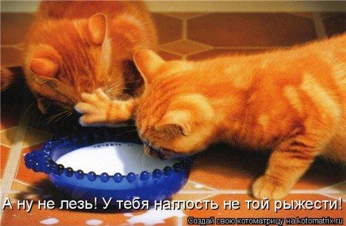 фотожабы котов рис 10