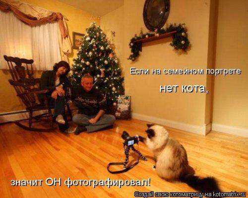 фотожабы котов рис 8