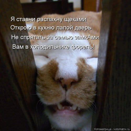 фотожабы котов рис 5