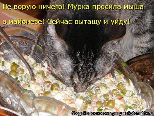 фотожабы котов рис 4