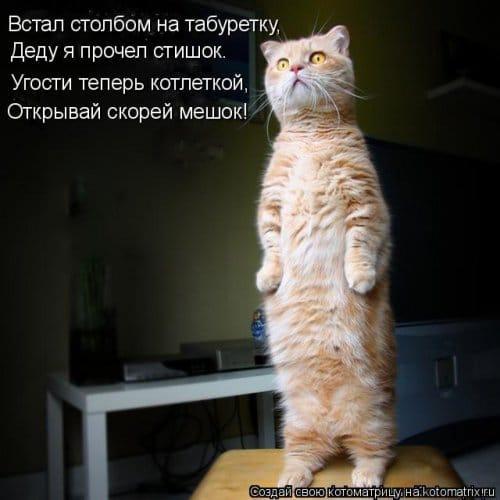 фотожабы котов рис 7