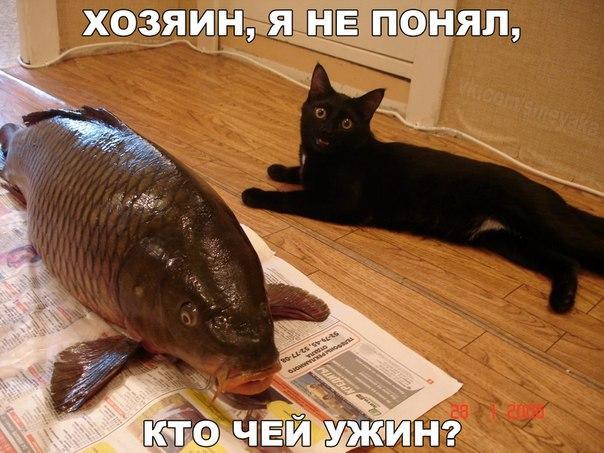 Кошки - они такие рис 4