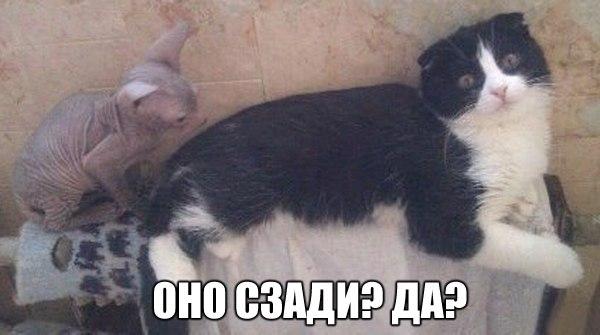 Без кота и жизнь не та!