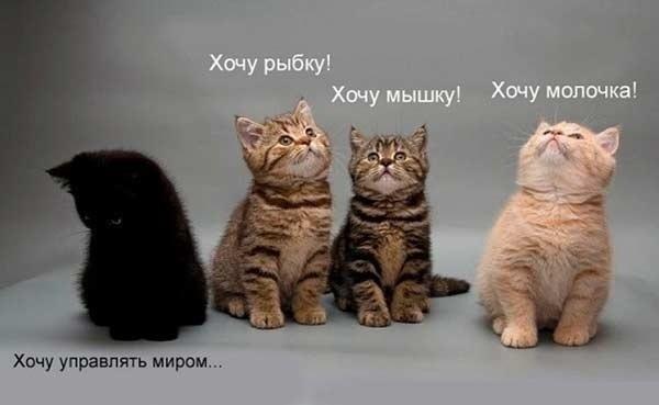 Кошки - они такие рис 3