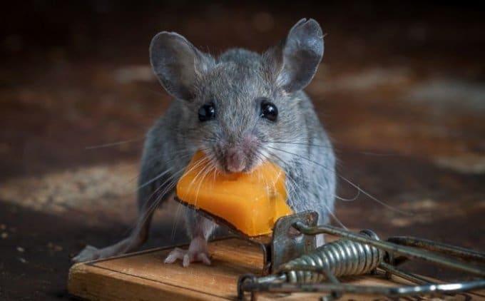 мыша-кач