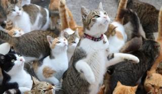 «Кошачий» остров в Японии пользователи соцсетей не оставили в беде!