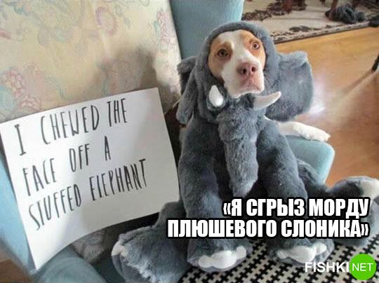 dog-logika6