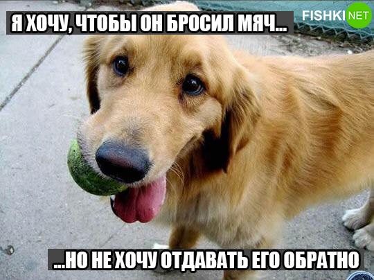 dog-logika7
