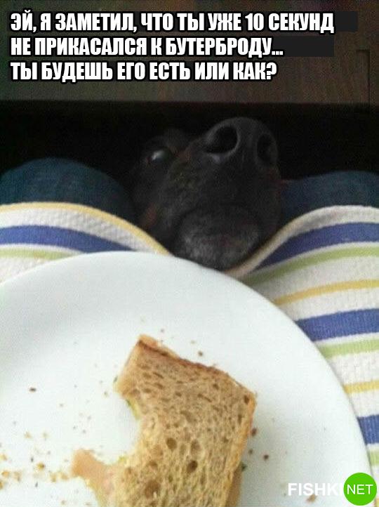 dog-logika8
