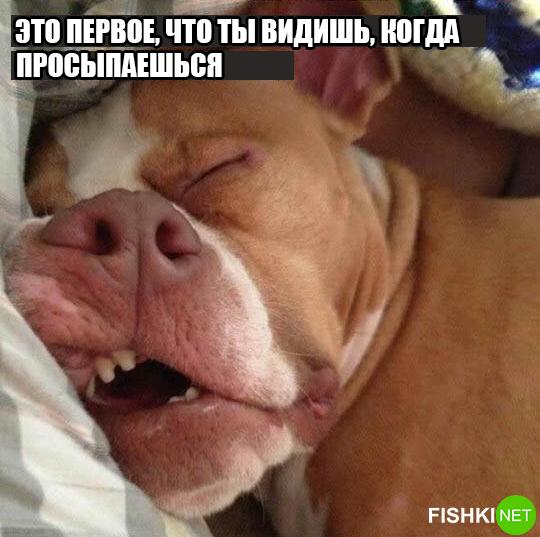 dog-logika10