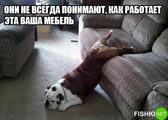 dog-logika15