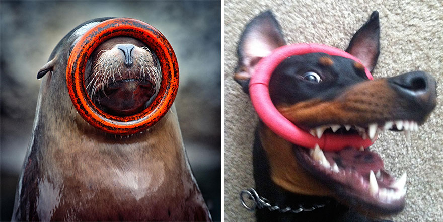 funny-seals-look-like-dogs14