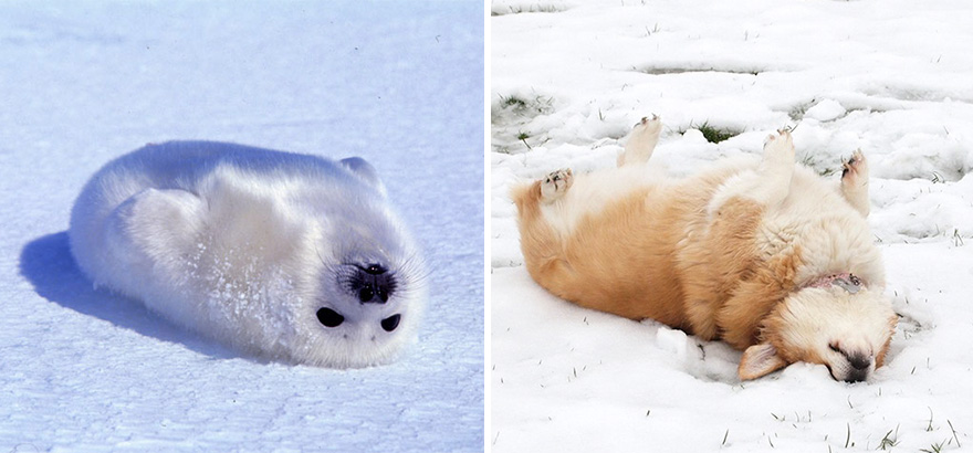 funny-seals-look-like-dogs1