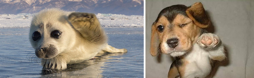 funny-seals-look-like-dogs12
