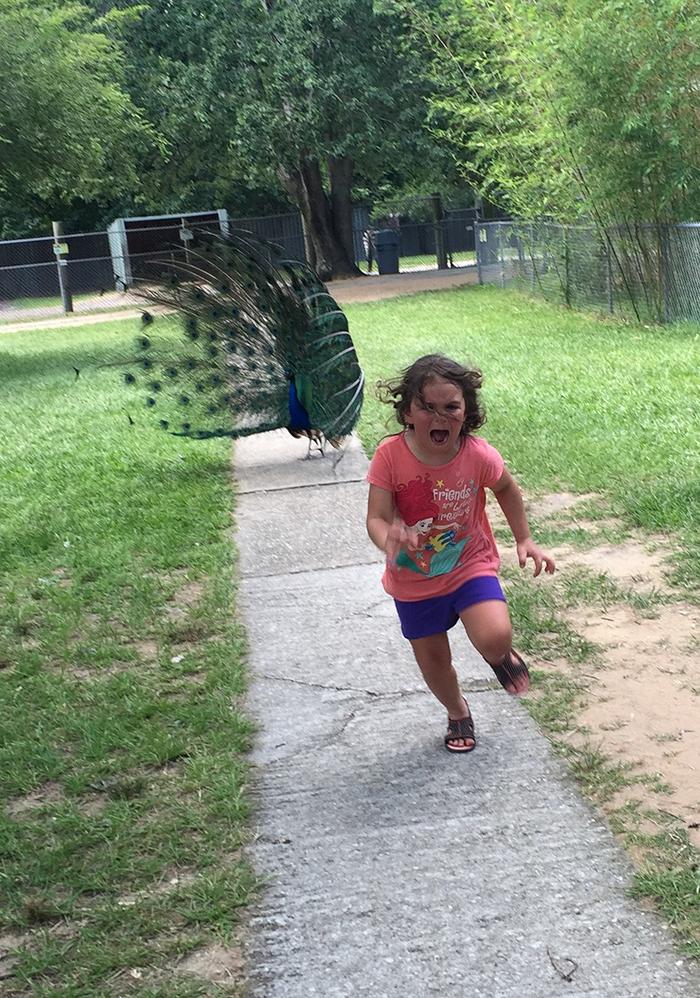 girl-running-from-peacock1