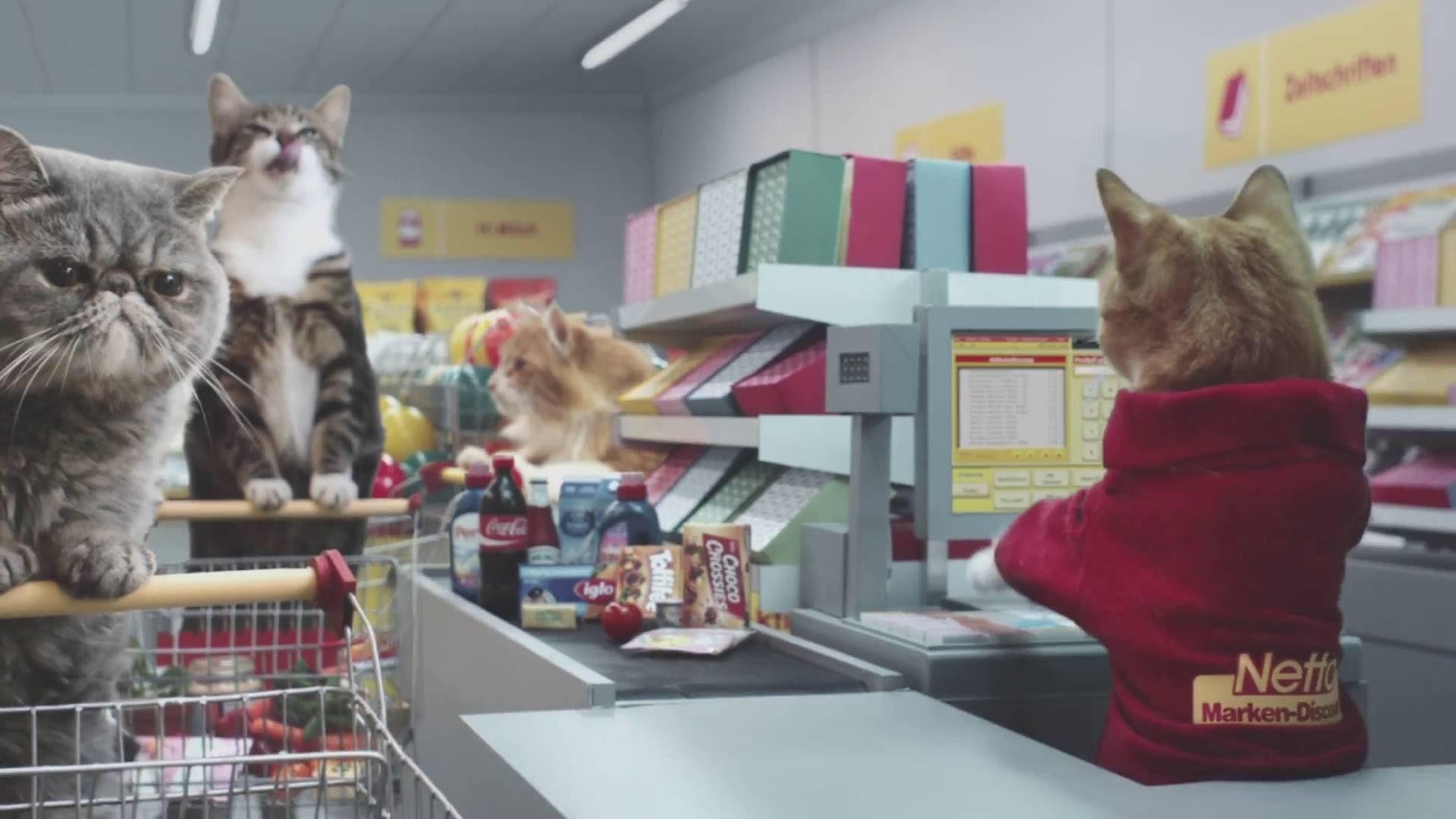 cat-supermarket