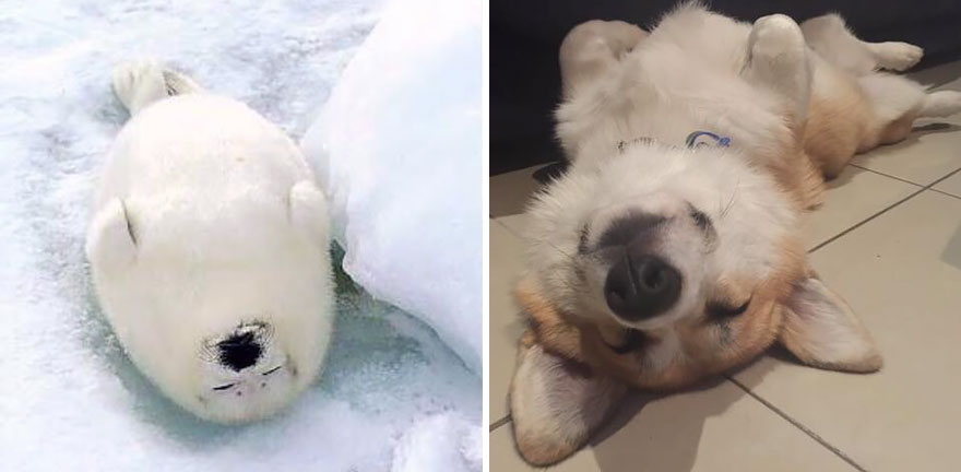 funny-seals-look-like-dogs3