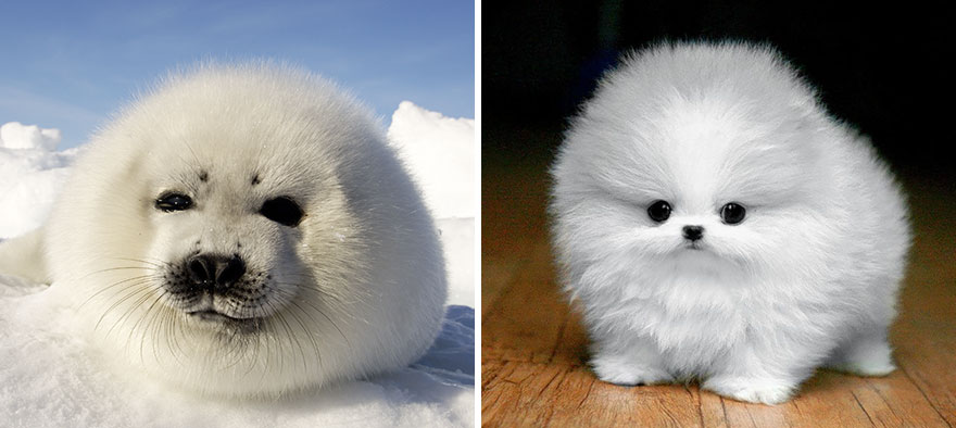 funny-seals-look-like-dogs6