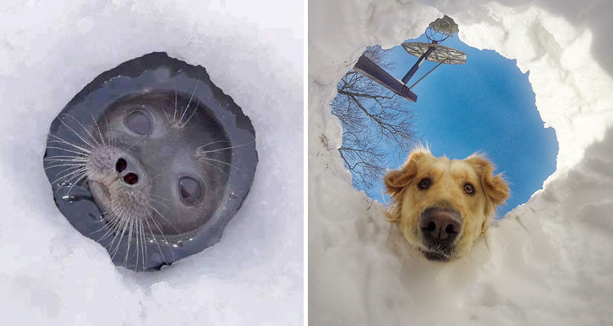 funny-seals-look-like-dogs9