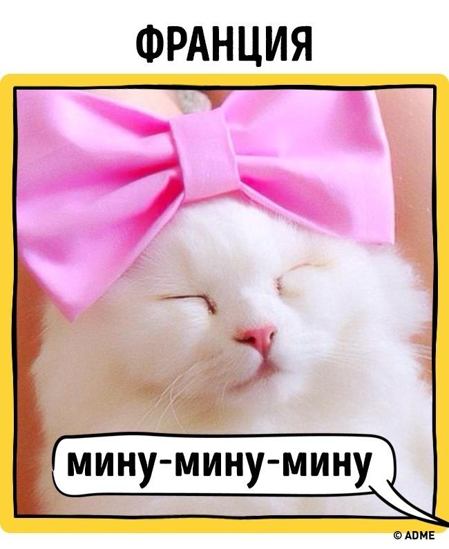 Как в разных странах подзывают кошек рис 3