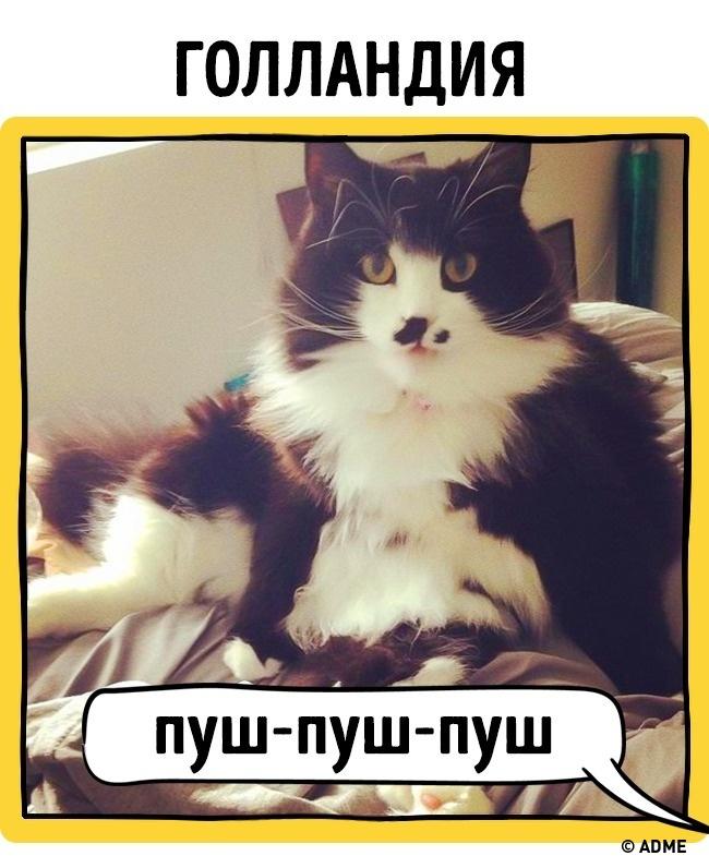 Как в разных странах подзывают кошек рис 4