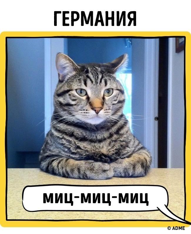 Как в разных странах подзывают кошек рис 5
