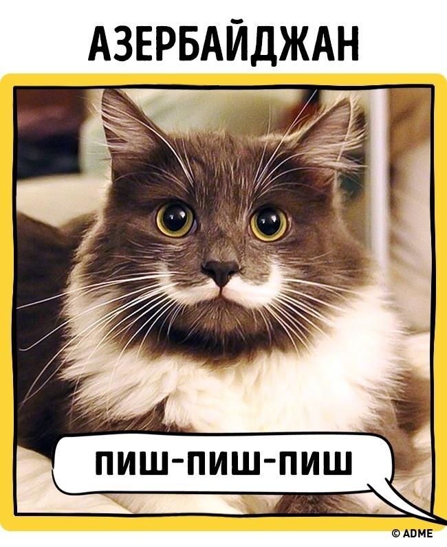 Как в разных странах подзывают кошек рис 8