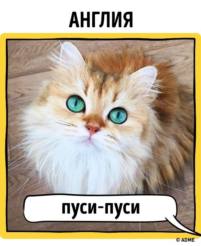 Как в разных странах подзывают кошек рис 9
