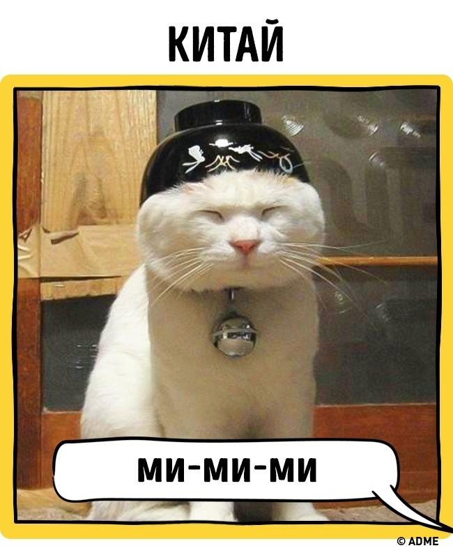 Как в разных странах подзывают кошек рис 10