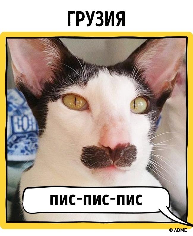 Как в разных странах подзывают кошек рис 11