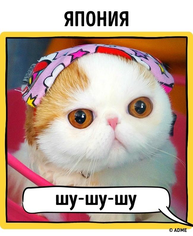 Как в разных странах подзывают кошек рис 12