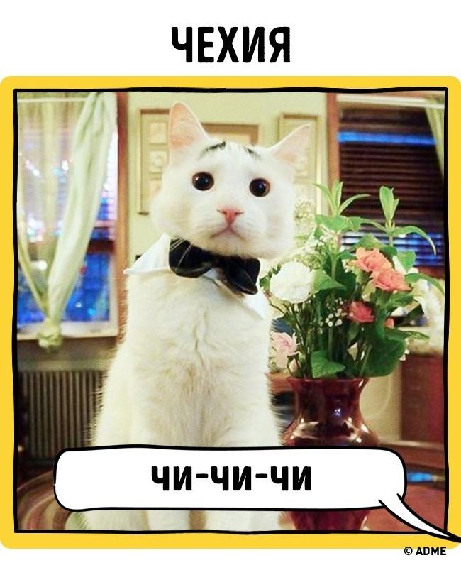 Как в разных странах подзывают кошек рис 13